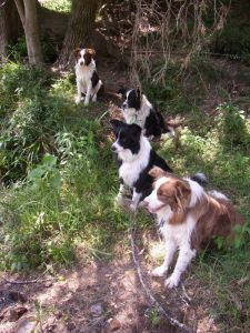 Chez, Kirra, Dotty & Treat