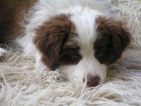 Jezz and ZuLu's puppy.