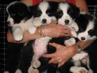 Kirra and Teddy's babies.