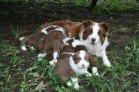 Truffle & Billy's Babies