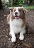 Otto, big cuddly boy!!